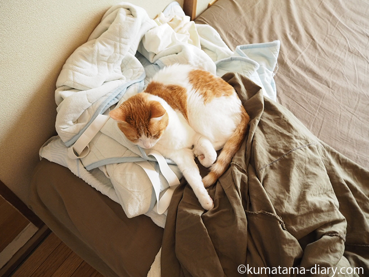 シーツの上の猫