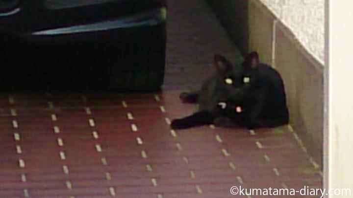 飼い猫の黒猫