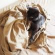 シーツまみれの黒猫