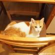 椅子を占領する猫