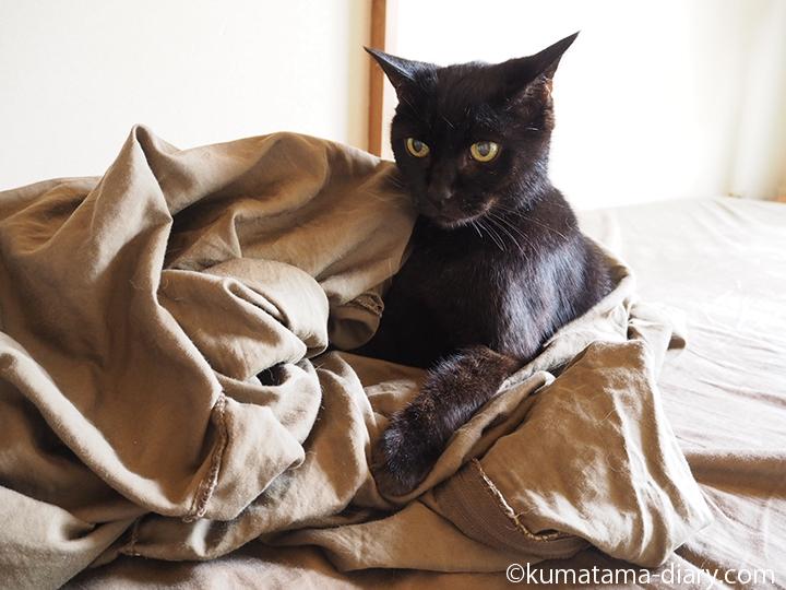 シーツの上の黒猫