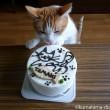 ケーキを舐める猫