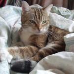 パリのホームステイ先の猫さん