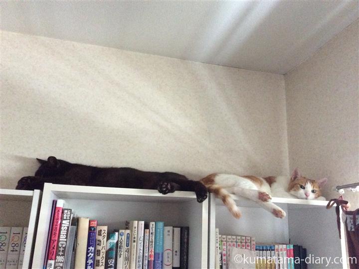 本棚の上の2匹
