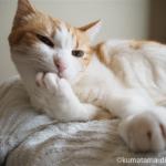 猫の毛づくろい(グルーミング)【動画】