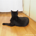 猫のリンパマッサージ