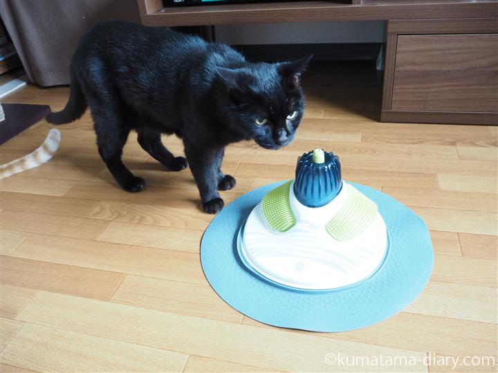 cat it マッサージセンターと猫