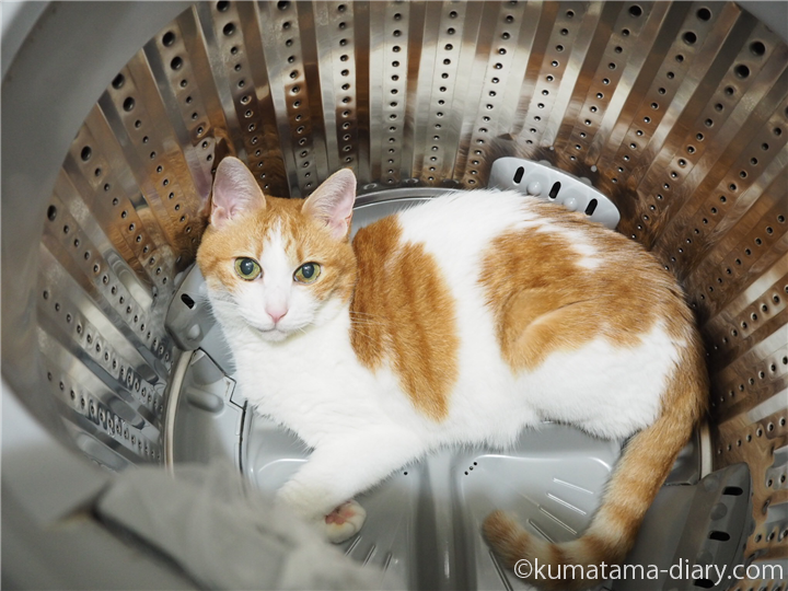 洗濯槽の中の猫