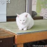 秩父仲見世通りの白猫さん