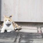 【入間市】ジョンソンタウンの三毛猫さん
