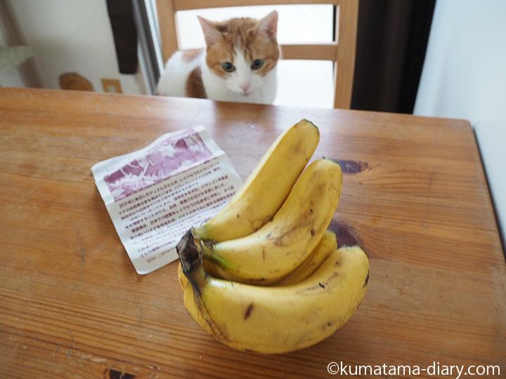 バナナを見つめる猫