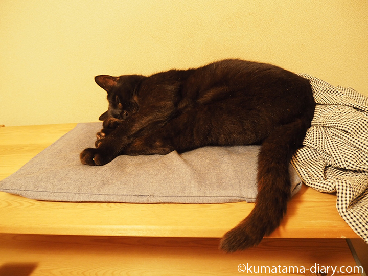 寝室で爆睡中の猫