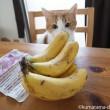 バナナのにおいをかぐ猫