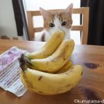 バナナv.s.猫