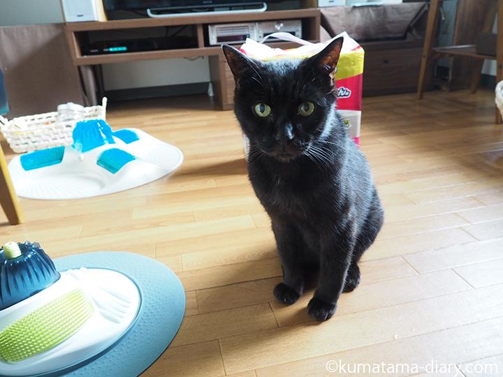 黒猫とシーツ
