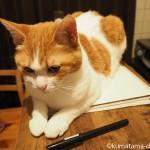 【猫あるある】スケッチブックの上で寝る猫