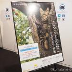 渋谷ヒカリエで岩合光昭写真展「ふるさとのねこ」を見てきました
