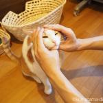 食べちゃいたいくらい可愛い猫の顔