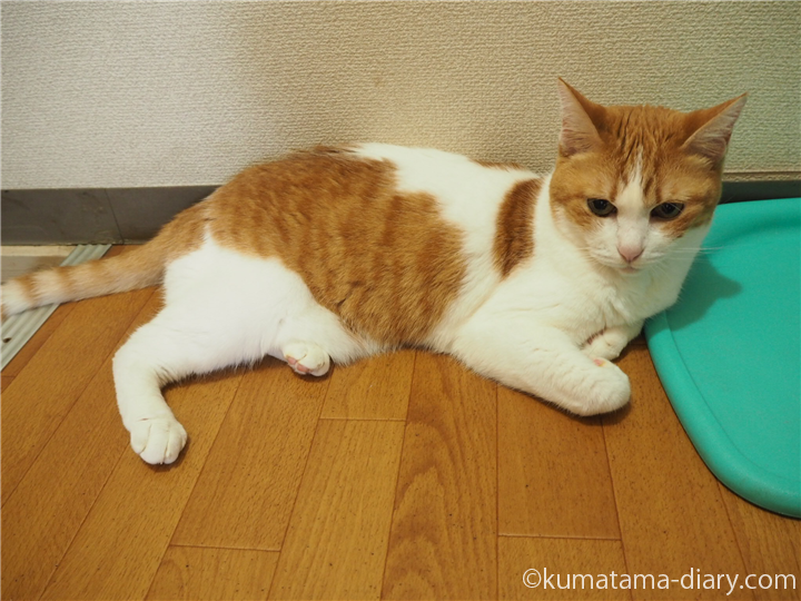 ひんやりマットと猫