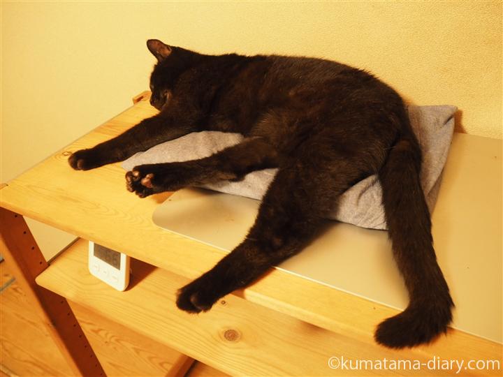 ひとりで寝る猫