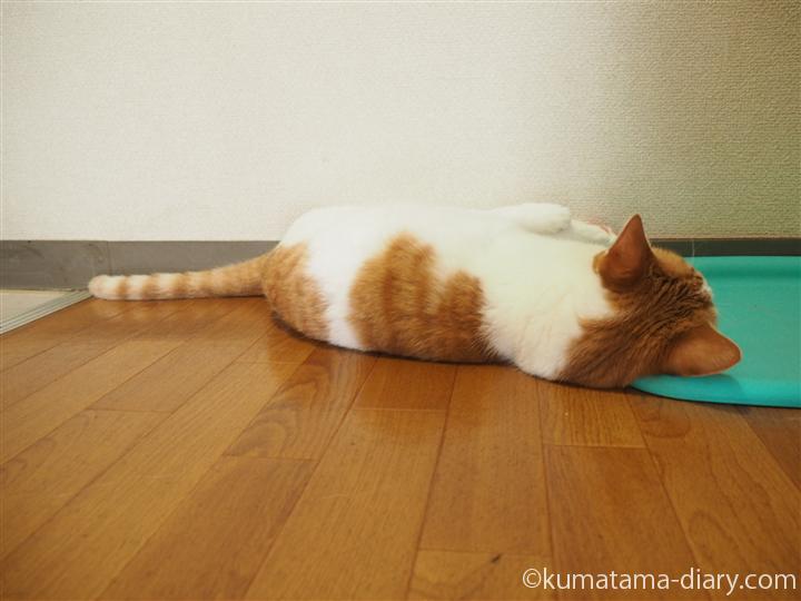 ひんやりマットを枕にする猫