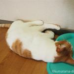 ひんやりマットを枕にして寝る猫