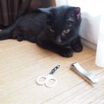 「愛猫の爪切り」と人間用の爪切り