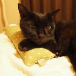 「またたびけりけり」は猫の枕としてもぴったりです♪