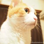 「猫はチビチビ食べる動物」だと、初めて知りました