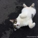 高倉町珈琲の駐車場の猫