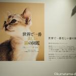 「世界で一番美しい猫の図鑑」写真展を見てきました