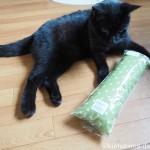 猫の誕生日に「またたびけりけり」をプレゼント