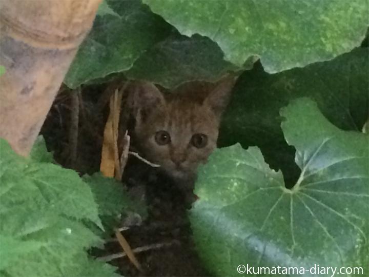 庭の子猫アップ