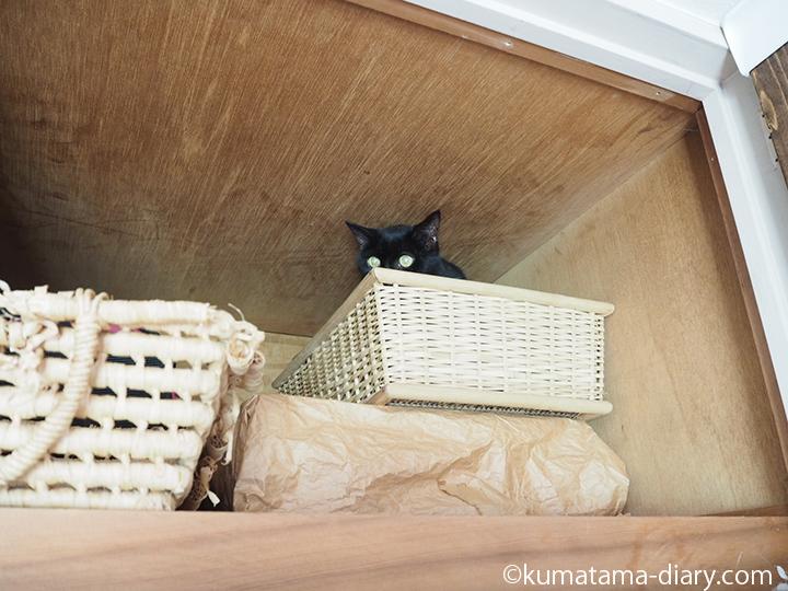 天袋のかごに入る猫