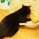 かごの中にある「またたびけりけり」で遊ぶ猫【動画レビュー】