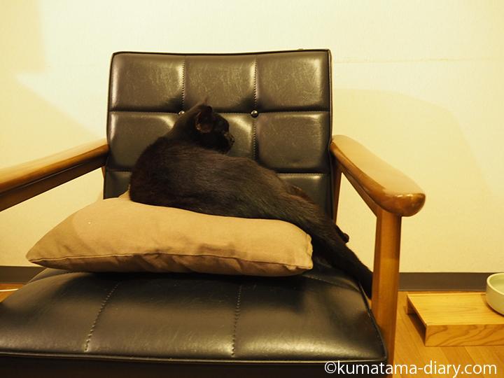 ソファーで寝るくま