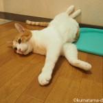 壁に足をつけて寝る猫