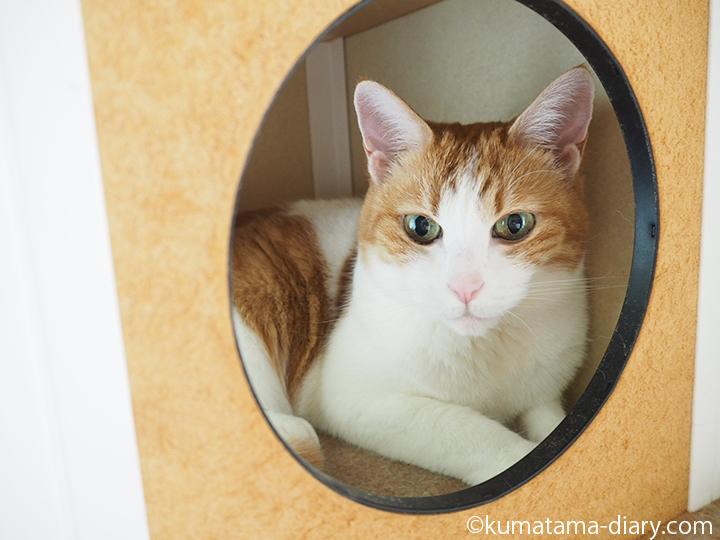 ボックスの中のネコ