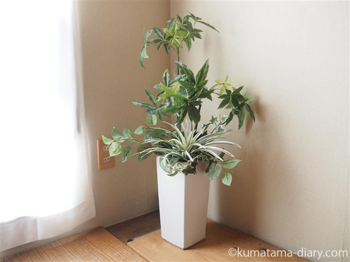 寝室に植物を移動