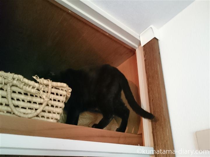 天袋に上がる猫