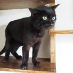 キャットウォークの棚板にあごをすりすりする猫【動画】