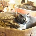池袋の猫カフェ「猫の居る休憩所299」へ行ってきました