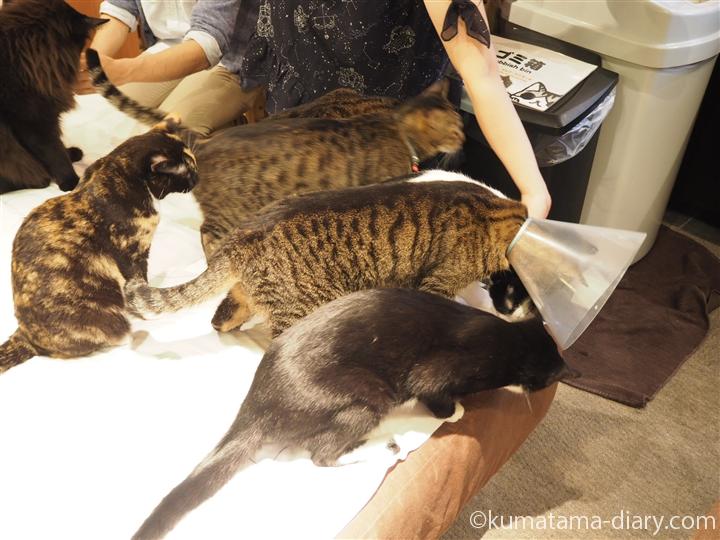 おやつに群がる猫たち