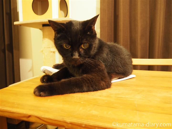 新聞の上の黒猫