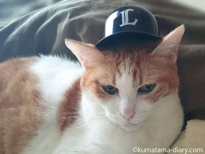 ヘルメットを被った猫