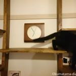 【DIY】キャットウォークは棚板の配置が重要【動画】