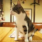 【猫がいる居酒屋】江古田の「赤茄子」へ行ってきました
