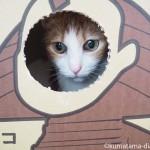 ビーグラッドストアネコの配送段ボールで遊んでみました【猫動画】