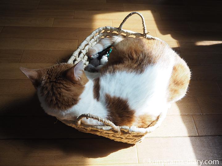 おもちゃかごの中で寝る猫
