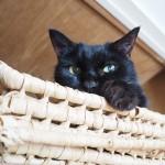 エサを2回に分けて食べるようになった猫の天袋生活